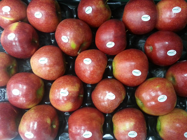 0 Jonagored 2 wytłoczka 12 kg stickery Applex GŁÓWNA