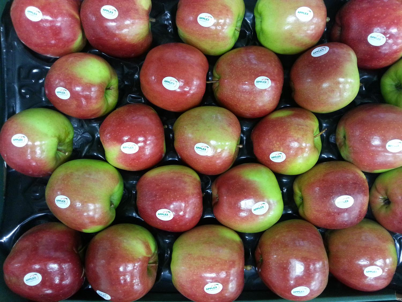 0 Ligol 2 wytłoczka 12 kg stickery Applex GŁÓWNE