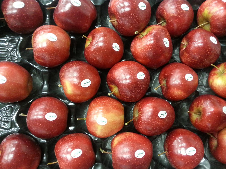 0 Red Jonaprince 2 wytłoczka 12 kg stickery Applex GŁÓWNA