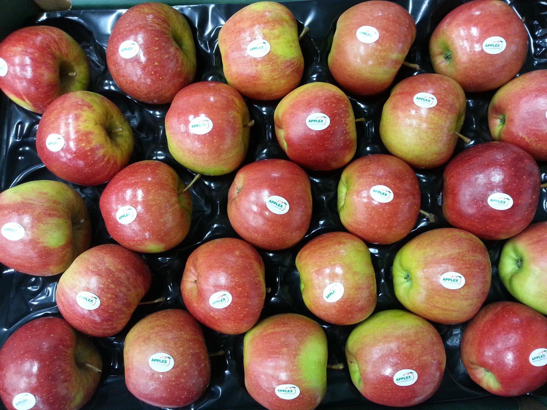 0 Szampion 2 wytłoczka 12 kg stickery Applex GŁÓWNA
