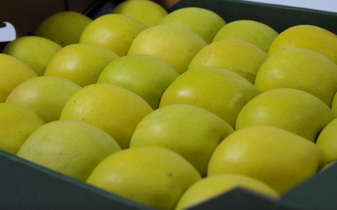12 Golden Delicious 1 wytłoczka 6 kg