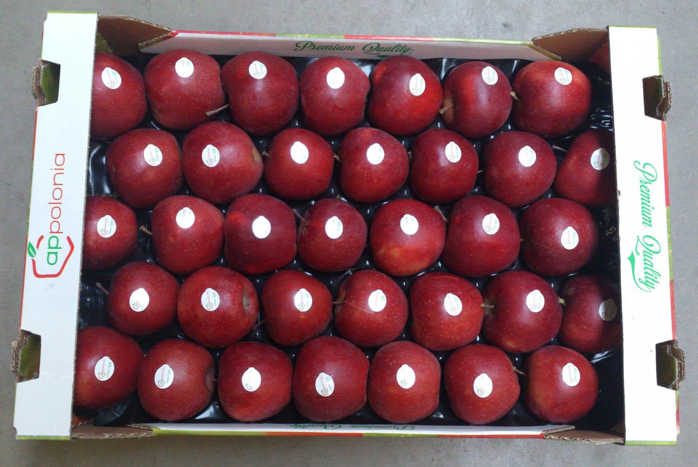 Red Jonaprince 6kg 1 wytłoczka 13